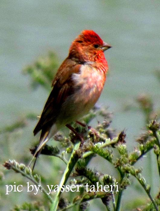 چسب پرنده دیانا بلتران هررا با استفاده از کاغذهای رنگی پرنده هایی بسیار زیبا ساخته اند.